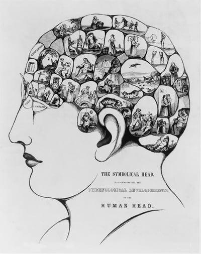La phrénologie: pseudosciencequi évalue l'intelligence à l'aide des formes du crâne