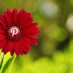 flor mostrando el logo de pinterest