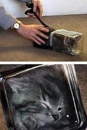 chat bulleschat dans un bocal